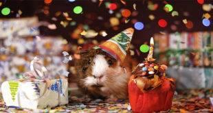 Fatos para Festas de Aniversário
